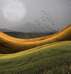 Egal ob Naturlandschaften oder andere Motive. Das passende Bild läßt die Homepage viel ansprechender aussehen